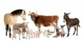 traceabilityinvestment230x234