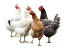 Poultrywelfarecentre230x170