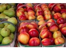 tenderfruit230x234