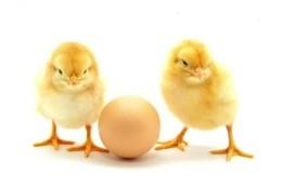 PoultryStatsCan260x234