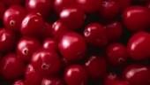 CranberryPlant230x234