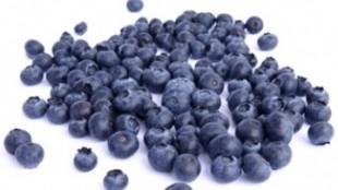 WildBlueberries360x211