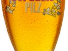 Pint of Saaz Republic Pilz from Big Rock Brewery