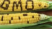 GMO-370x300