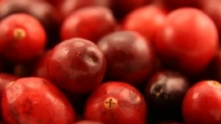 CranberriesFreeDigital370x300