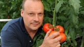 SERRES SAGAMI - Serres Sagami: Tomatoes and jobs for Charlevoix
