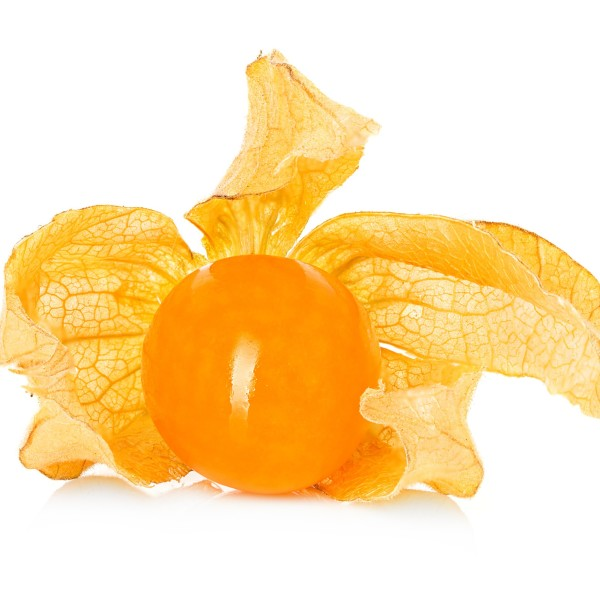 Physalis fruit isolated