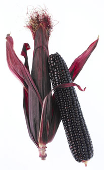 maize_on_the_cob_2