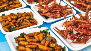 Special food , Fried grasshoppers in thailand,closeup