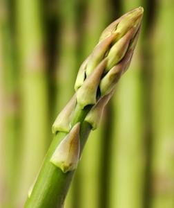 AsparagusCloseUp252x300