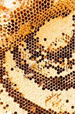 HoneycombwBeesFreeDigital266x400