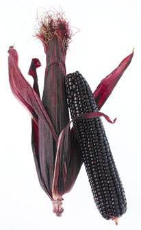 maize_on_the_cob_2
