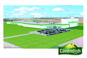 A rendering of what the new Lethbridge plant will look like